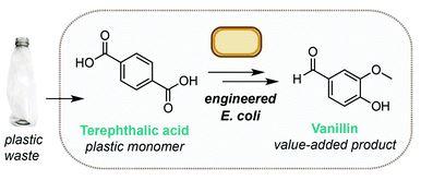 Proceso de generación de vainillina a partir de PET residuo